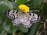 Another Butterfly by Ferg, photography->butterflies gallery