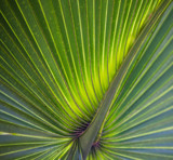 Palm Leaf by Pistos, photography->nature gallery
