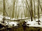 Sepia Stream by Jeremy805, Photography->Landscape gallery