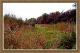 Zeeland Autumn Palette 3 (of 4) by corngrowth, Photography->Landscape gallery