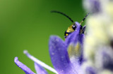 free desktop monitor by tee, photography->insects/spiders gallery