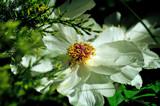 BBG 2 by SatCom, Photography->Flowers gallery