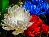 The Old Red, White and Blue by cynlee, photography->flowers gallery
