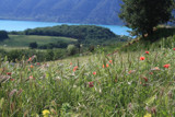 Poppies in a meadow amidst a turquoise lake in the backgroun by drbasil, Photography->Landscape gallery
