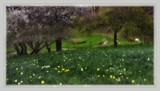 Spring Shows Her Face by LynEve, photography->landscape gallery