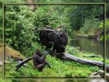 Three Gorilla's by wimida, Photography->Animals gallery