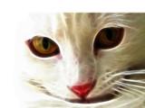 Something Caught Luna's Eye - rework by Hottrockin, rework gallery