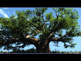 Tree by Popaj, Computer->Landscape gallery