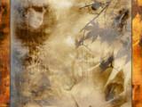 Golden Light by speedy_10, computer gallery