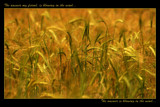 blowin in the wind! by JQ, Photography->Nature gallery