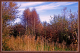 Young Forest  InThe Fall by corngrowth, Photography->Nature gallery
