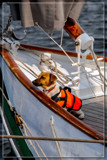 Experienced Sailor by corngrowth, photography->animals gallery