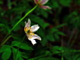 Woodland Flower by biffobear, photography->flowers gallery