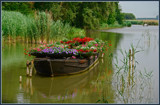 Flower Boat by corngrowth, Photography->Flowers gallery