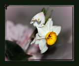 It Might As Well Be Spring! by LynEve, Photography->Flowers gallery