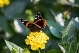 Red Admiral at Port by Pistos, photography->butterflies gallery