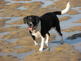 young sea dog by funkyaxe, photography->pets gallery