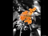 Assassin by hobgoblin, photography->butterflies gallery