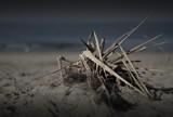 Beach Grass by Jimbobedsel, photography->nature gallery