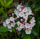 Flowers of East Tennessee (3) by Pistos, photography->flowers gallery