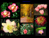 First Collage by trixxie17, Photography->Flowers gallery