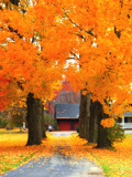 Orange Carpet by ccmerino, Photography->Landscape gallery