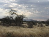 Windswept by jono00, photography->landscape gallery