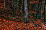 Fence in Wood by biffobear, photography->landscape gallery