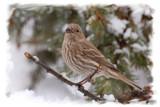 Winter bird... by egggray, Photography->Birds gallery