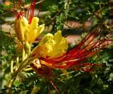 Unidentified Shrub by trixxie17, photography->flowers gallery