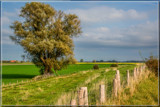 Meanwhile The Cows Are Gone by corngrowth, photography->landscape gallery