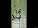 Home Tweet Home by Hottrockin, Photography->Birds gallery