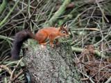 Keeping by biffobear, photography->animals gallery
