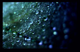 Emeralds by jesouris, Photography->Macro gallery