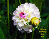 Happy Birthday Pat by Ramad, photography->flowers gallery