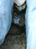 Drip..Drip..Drip... by RisaT8, Photography->Nature gallery