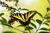 Butterfly Effect III by stylo, photography->butterflies gallery