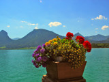Flowers with a view by Blumie, Photography->Flowers gallery