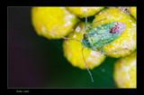 Burden by kodo34, Photography->Macro gallery