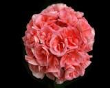 Aorta by jojomercury, photography->flowers gallery