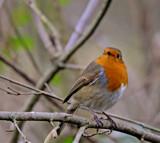 A Spirit by biffobear, photography->birds gallery