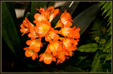 F² Contribution 3 by corngrowth, Photography->Flowers gallery