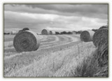 Fields of Hay by slybri, Photography->Landscape gallery
