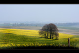 yellow fields by JQ, Photography->Landscape gallery