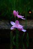 Waterlover by biffobear, Photography->Flowers gallery