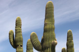 Saguaros in color by jeenie11, photography->nature gallery