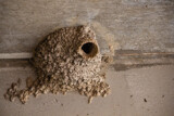 Cliff Swallow Nest by Pistos, photography->birds gallery