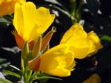 Heat Seekers by wheedance, Photography->Flowers gallery