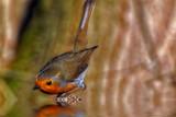 Who's a pretty boy then.. by biffobear, photography->birds gallery