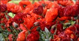 ANZAC Day - Lest we forget . . . . by LynEve, photography->flowers gallery